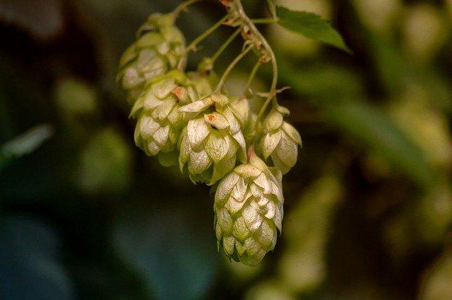 Krolestwo Mocy - producent urządzeń do destylacji - bimber, piwo